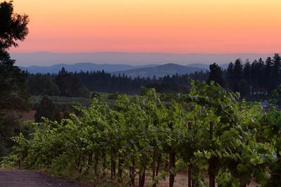 Madrona Winery-1031