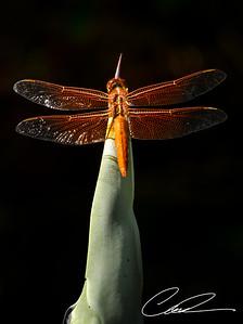 Dragonfly0023-Edit