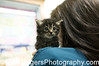 Tabby Kitten under care of Dr Monica Thompsan at Nine Lives Foundation