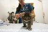 Dr Thompson, works on a tabby kitten