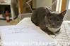 Cat at Nine Lives Foundation