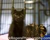 Kitten at Nine Lives Foundation