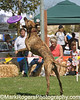 The OTHER Dog Show - Day 1