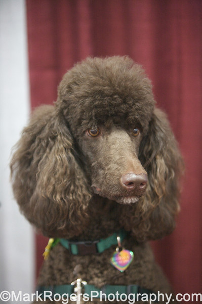Bay Area Poodle Rescue Booth