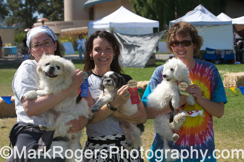 The OTHER Dog Show - Day 1<br /> The Muttville and Grateful Dogs Gang