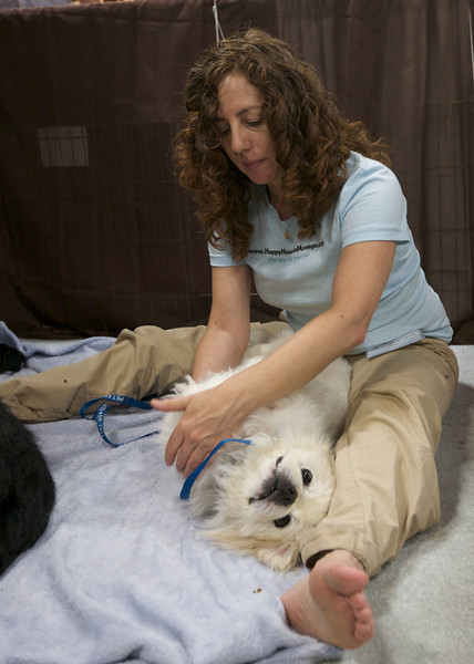 Shelah Barr of Happy Hounds Massage<br /> Bay Area Pet Fair 2008