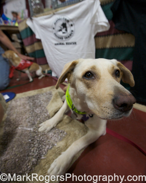 Hopalong/Second Chance Rescue Booth