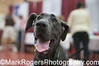 Pet Fair Attendee<br /> Great Dane