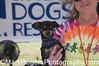 Grateful Dogs Rescue Booth