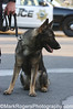 Marko<br /> German Shepherd<br /> San Carlos Police Department K-9 Unit