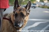 Megan<br /> German Shepherd Rescue of Northern California