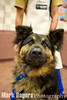 Tornado, German Shepherd Mix, gets ready to do battle with the pet wash at the new Burlingame Pet Food Express