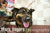 Tornado, German Shepherd mix, tries out the the pet wash at the new Burlingame Pet Food Express