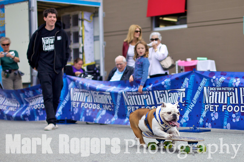 One of Tillman's friends, a skateboarding bulldog in training, warms up the crowd