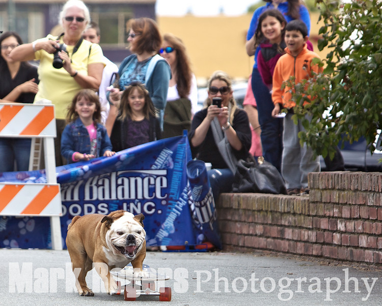 Tillman the skateboarding bulldog wows the crowd