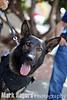 Ivan, German Shepherd,  Burlingame Police Department K9 Unit