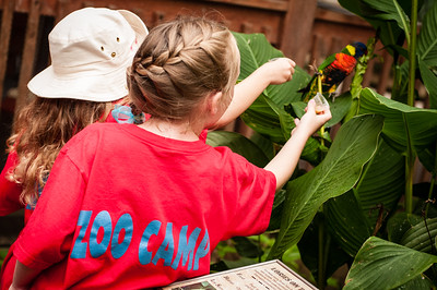 2013 Zoo Summer Camp 028