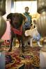 San Francisco SPCA Dog Day on the Bay