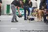 San Francisco SPCA Dog Day on the Bay<br /> Pre-Boarding