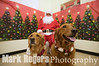 Santa Photos Rocket Dog Rescue :