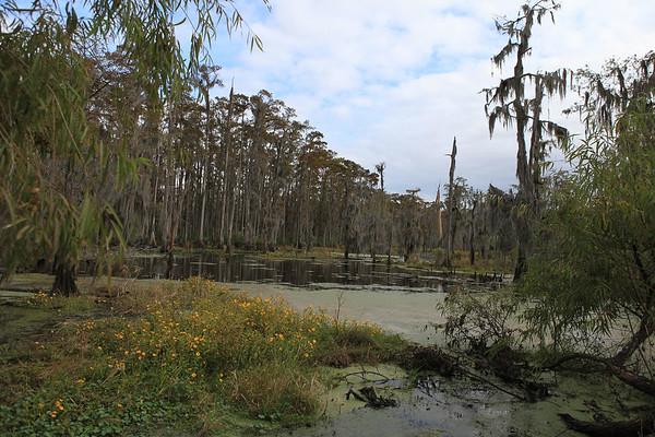 New Sarpy Swamp0002