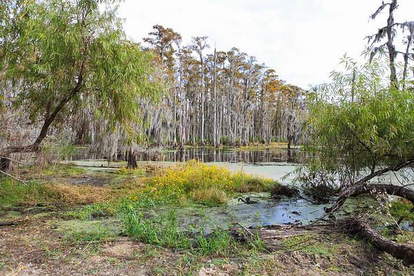 New Sarpy Swamp0001