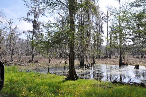 New Sarpy Swamp0001-2