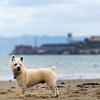 Oscar_Alcatraz_0824