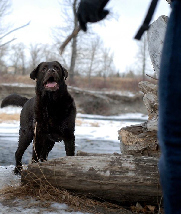 calgary dog photography dog portraiture dog photojournalism dogs victoria b.c. photographer