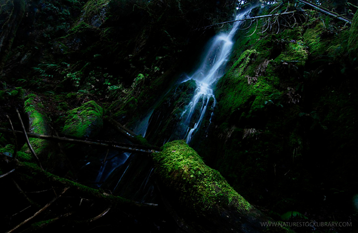 goldstream photography in Victoria B.C. Canada Vancouver Island Nature Photographer