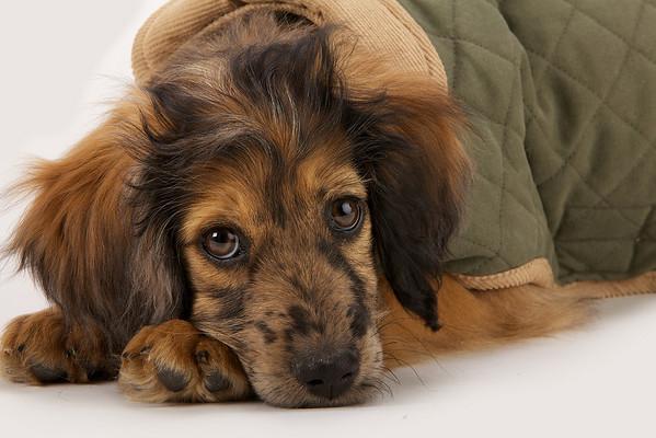 Client: Doggone Smart Pet Products