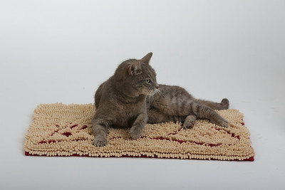 Cat&Mouse 8