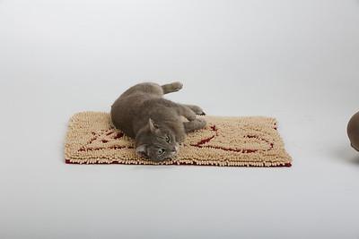 Cat&Mouse 4