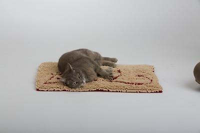 Cat&Mouse 3