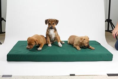 DGS_Pups 12