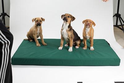 DGS_Pups 10