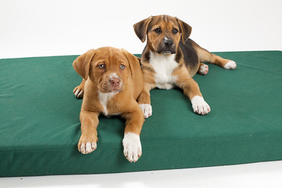 DGS_Pups 2