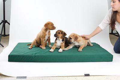 DGS_Pups 4