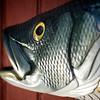 NantucketWC_05-22-09 9