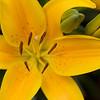 Flowers_2009 62