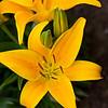 Flowers_2009 56