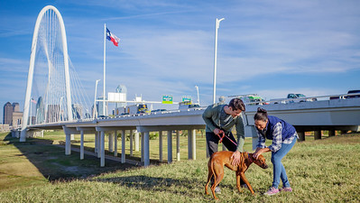 113017_10582_Bridge Skyline_Walk Dog