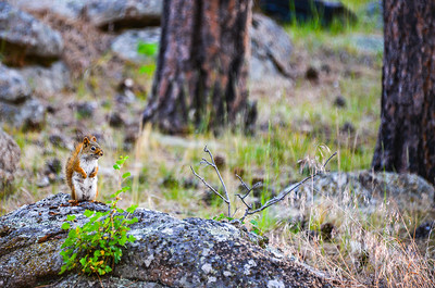 Devils Tower Squirrel