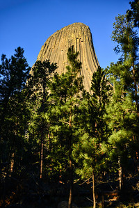 Devils Tower view from the bottom of the trail looking up through the pines.  It was about 5am when I was there and I only saw 2 people the entire time.  It was a really cool, and a little spooky.