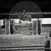 Aniko Towers Photo Amadeus Mevisto Show jumping equestrian photography -12