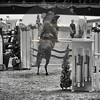 Aniko Towers Photo Amadeus Mevisto Show jumping equestrian photography -19