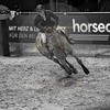 Aniko Towers Photo Amadeus Mevisto Show jumping equestrian photography -2