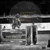 Aniko Towers Photo Amadeus Mevisto Show jumping equestrian photography -9