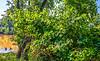 Meramec River bike route snaps _W7A0145-Edit - 72 ppi