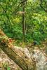 Taum Sauk section of Ozark Trail in Missouri - 18-Edit-Edit - 72 ppi